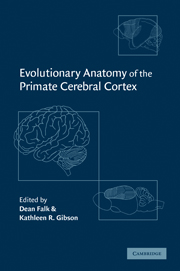 Evolutionary Anatomy of the Primate Cerebral Cortex