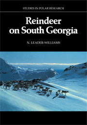 Reindeer on South Georgia