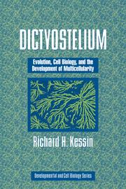 Dictyostelium