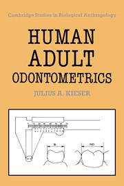 Human Adult Odontometrics
