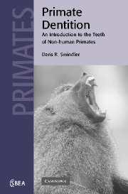 Primate Dentition