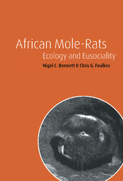 African Mole-Rats