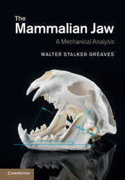 The Mammalian Jaw