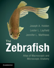 The Zebrafish