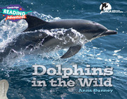 Dolphins in the Wild 3 Explorers