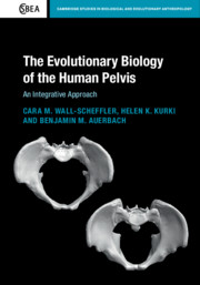 The Evolutionary Biology of the Human Pelvis
