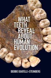 What Teeth Reveal about Human Evolution