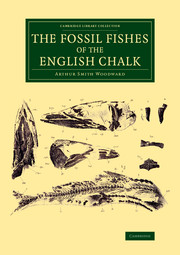 The Fossil Fishes of the English Chalk