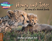 Honey and Toto: the story of a cheetah family